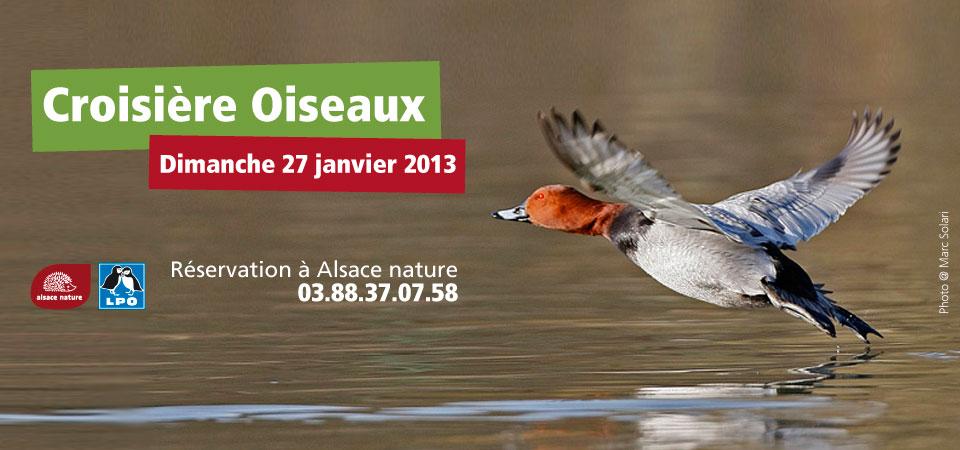 Croisière Oiseaux 2013