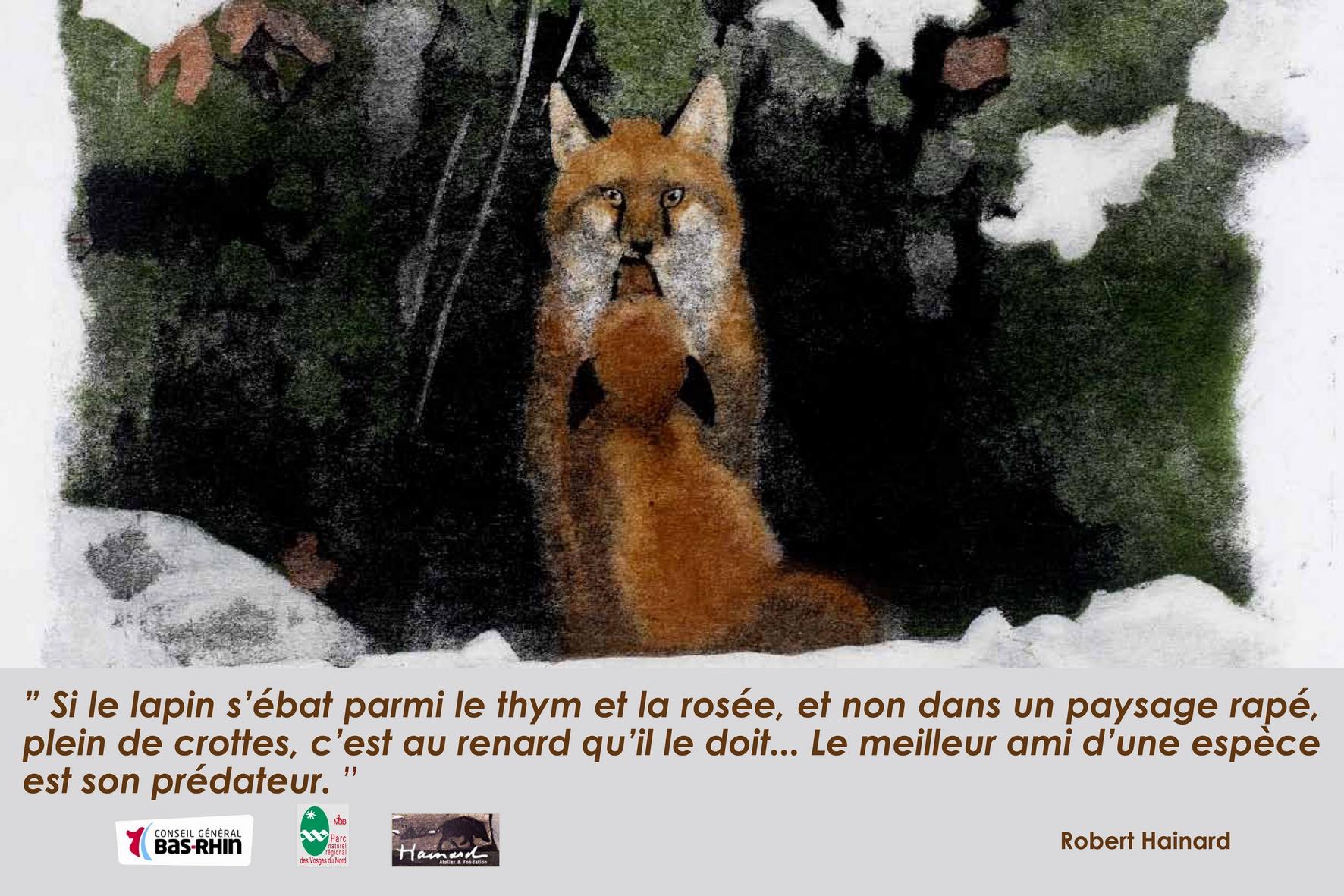 [faune] Chasse de nuit des Renards (pour protéger le Hamster) : arrêté préfectoral annulé par le Tribunal