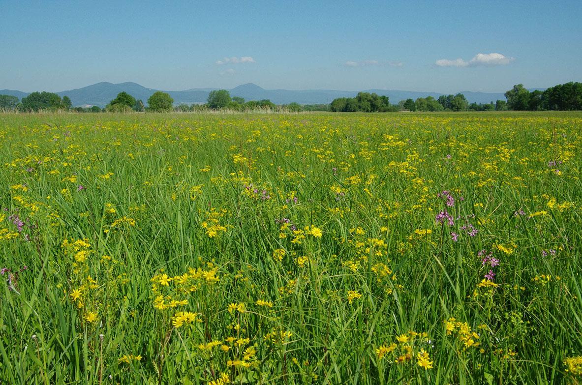 [Communiqué] Lancement de l'AFB mais l'effritement de la biodiversité alsacienne continue