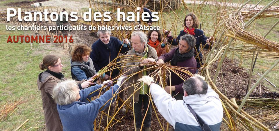 Plantons des haies : les chantiers participatifs de haies vives d'Alsace