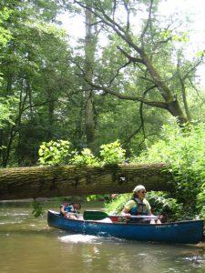 sortie nature en canoë - « L'Ill au fil de l'eau » @ Strasbourg-de la Robertsau à La Wantzenau