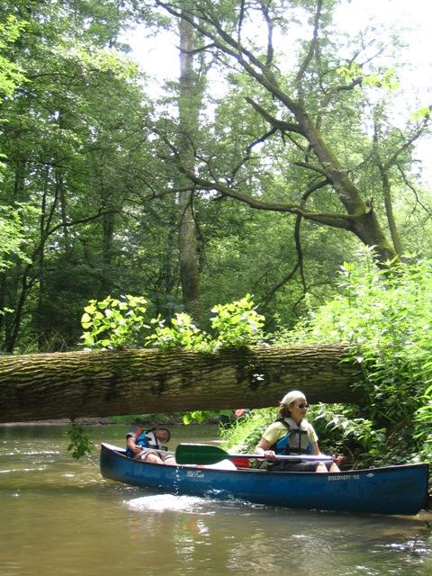 sortie nature en canoë – « L'Ill au fil de l'eau »