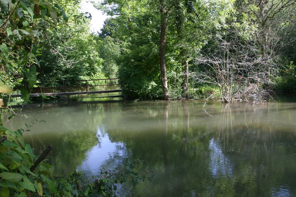 Sortie Nature : à la découverte de la forêt du Rhin