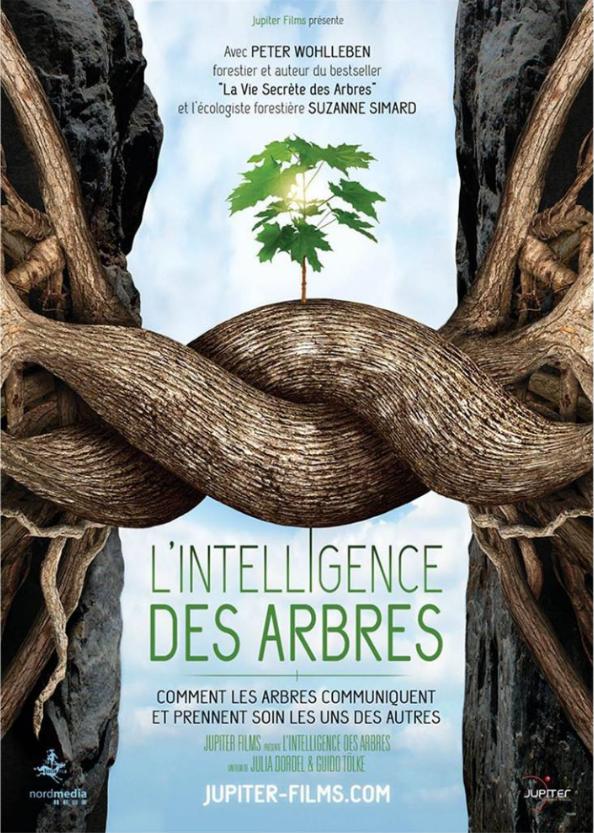 [Ciné-débat] janv et fév : l'intelligence des Arbres à Strasbourg