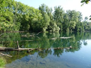 Balade nature dans l'Eurométropole : La Wantzenau @ La Wantzenau