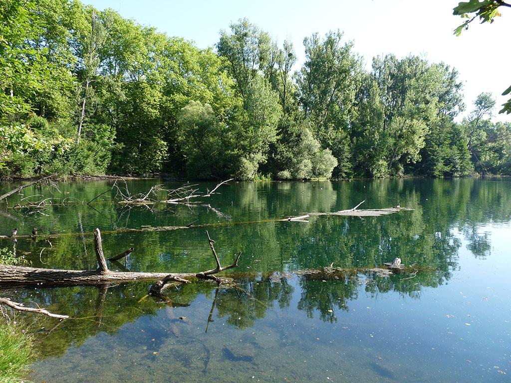 [Tribune] Forêt de la Robertsau – La Wantzenau : un bien commun à protéger