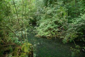 Découverte de la source phréatique du Sauerbrunnen @ Office de Tourisme - ERSTEIN | Erstein | Grand Est | France