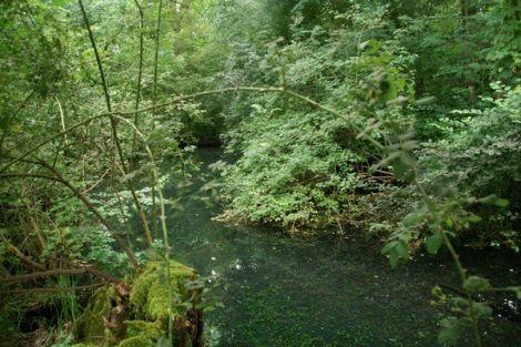 Découverte de la source phréatique du Sauerbrunnen