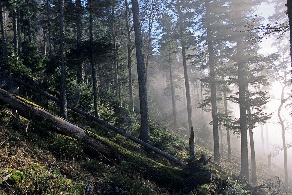 La Forêt, pour qui, pour quoi ?