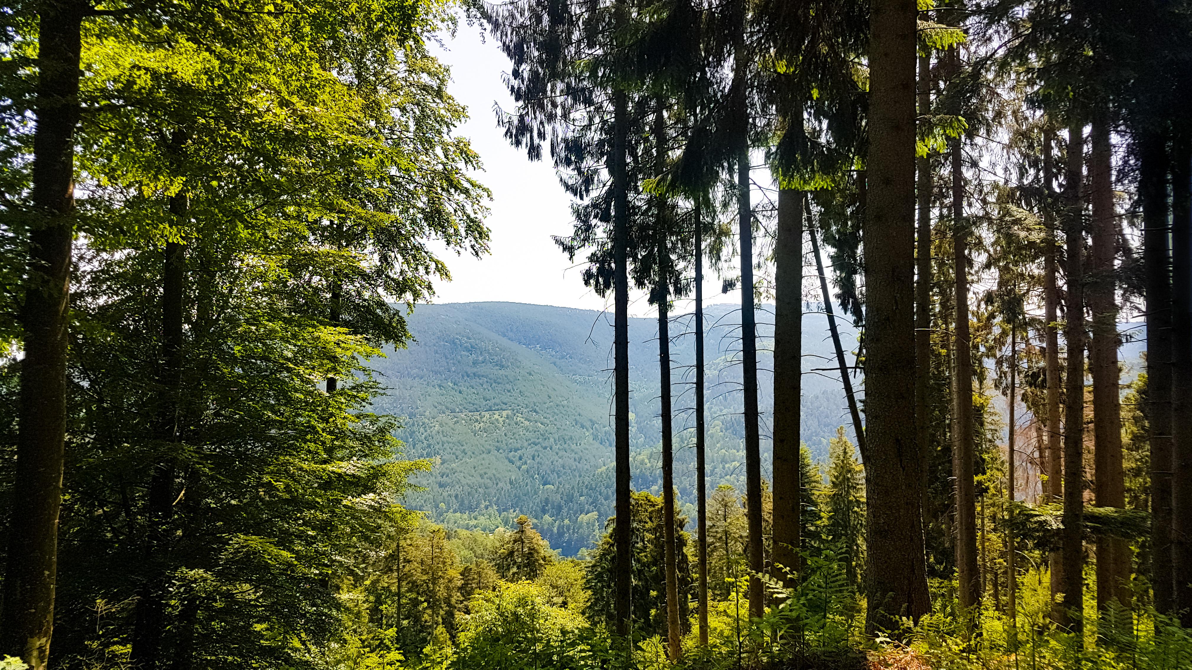 Projet de téléphérique au Mont Sainte-Odile : le groupe local Piémont en sentinelles de la Nature
