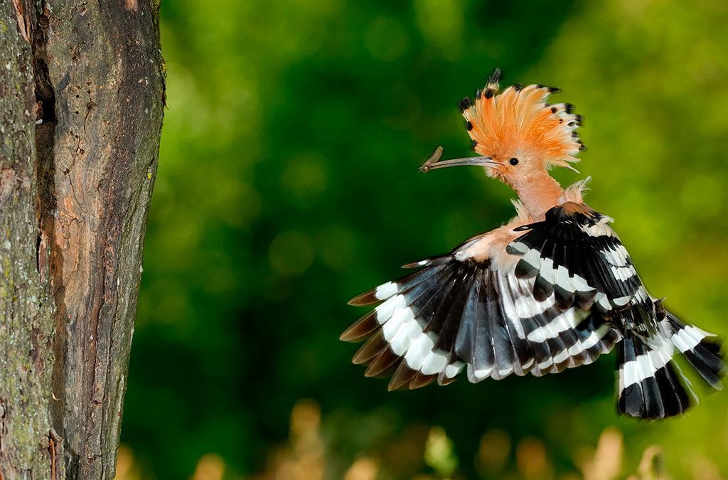 Le Mont de Sigolsheim et ses oiseaux