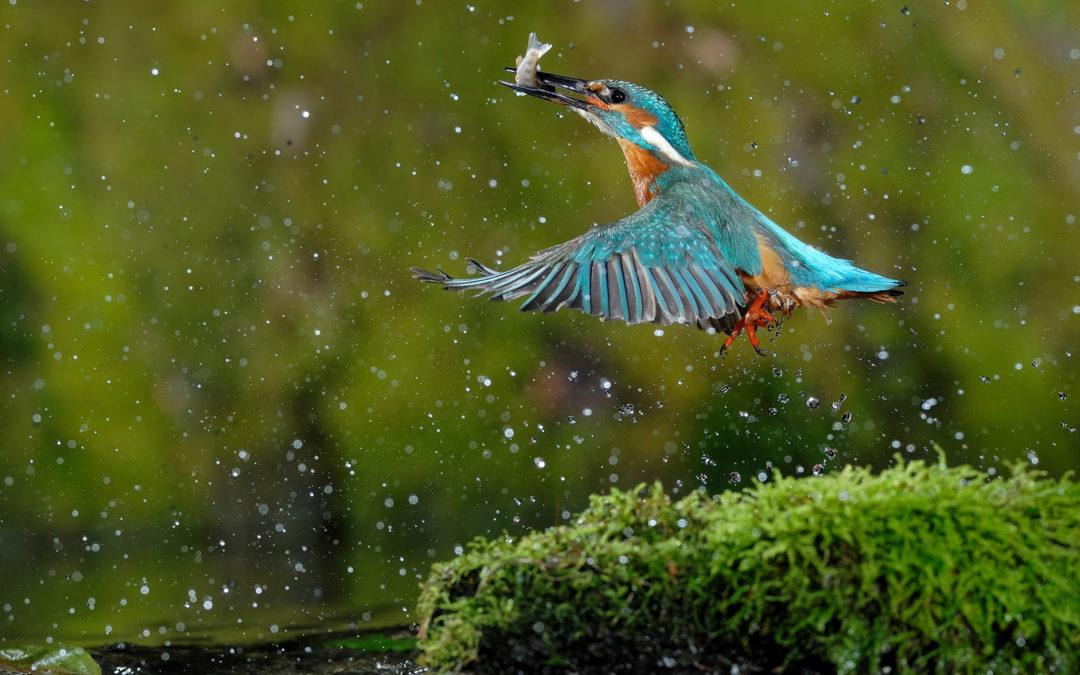 REPORTE – Les oiseaux de l'île de Rhinau