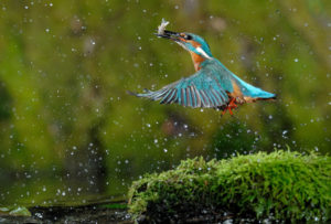 Les oiseaux de l'île de Rhinau @ Communiqué à l'inscription | Diebolsheim | Grand Est | France
