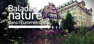 Forêt du Neuhof @ Communiqué à l'inscription | Strasbourg | Grand Est | France