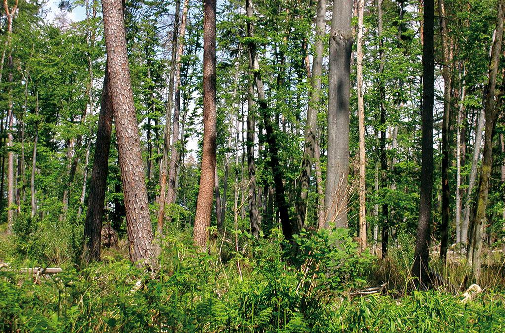 Forêt en crise : 21 propositions pour préserver nos forêts