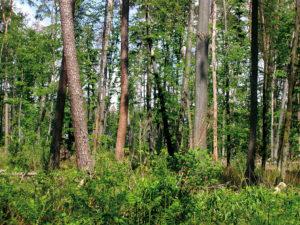 [ANNULATION] En forêt de Haguenau @ Lieu-dit « Gros Chêne »   Haguenau   Grand Est   France