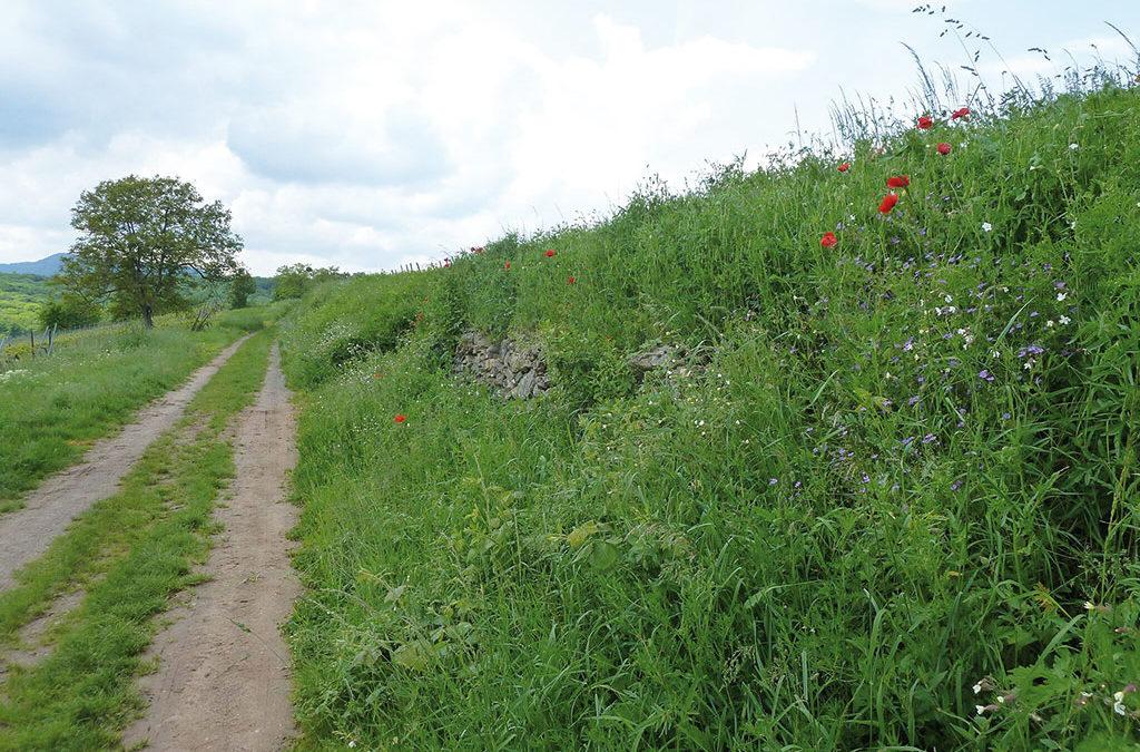 Plus de biodiversité dans les gestions des zones herbeuses