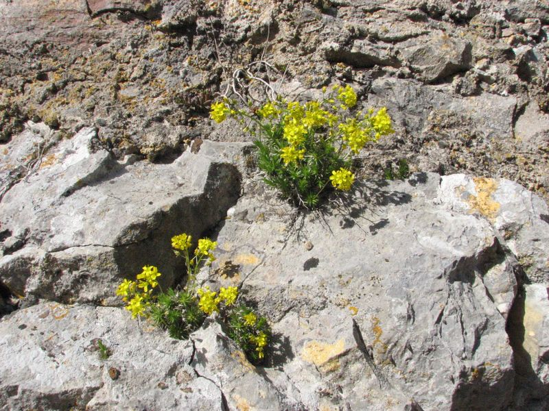 Les fleurs des Loechlefelsen au fil des mois