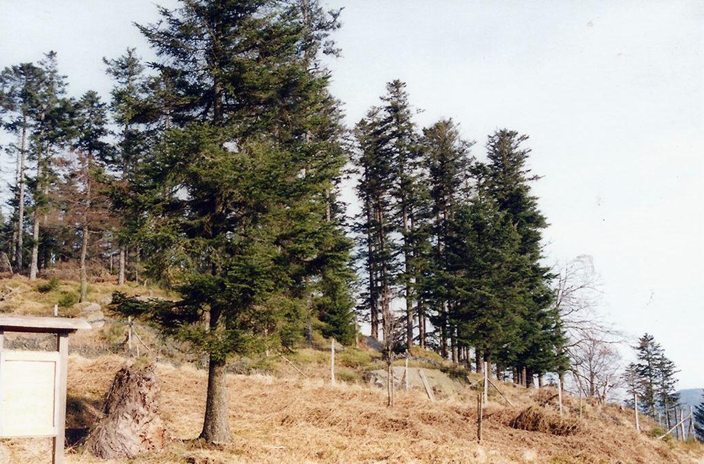 Réserve biologique intégrale (RBI) de la Chatte-Pendue