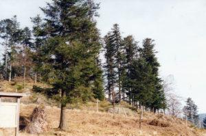Réserve biologique intégrale (RBI) de la Chatte-Pendue @ Etang du Coucou près de Schirmeck | Schirmeck | Grand Est | France