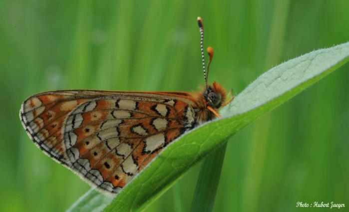 A la découverte des papillons et orchidées avec le groupe local Alsace Nature – Val de Villé