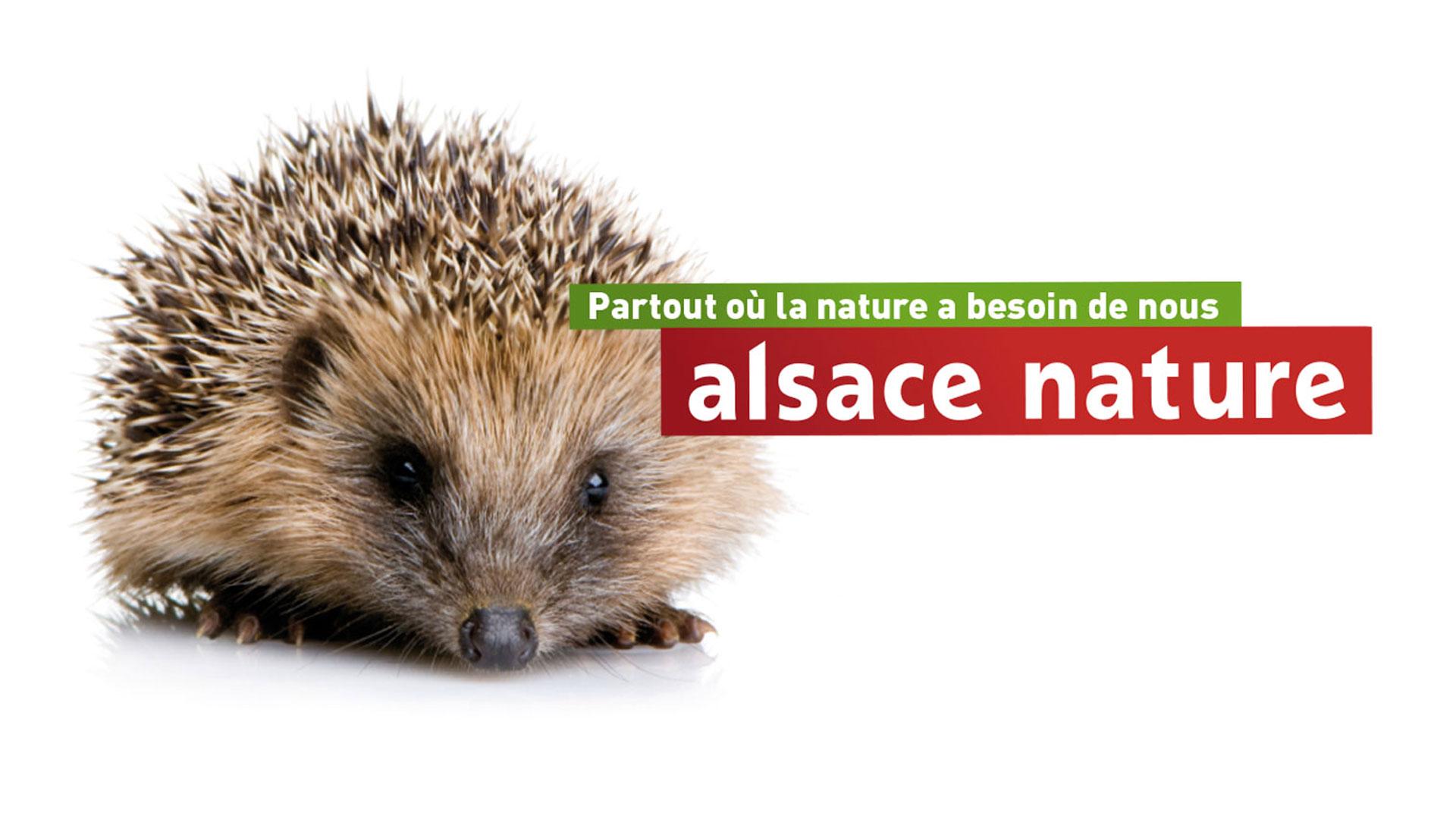 Alsace Nature Partout Ou La Nature A Besoin De Nous