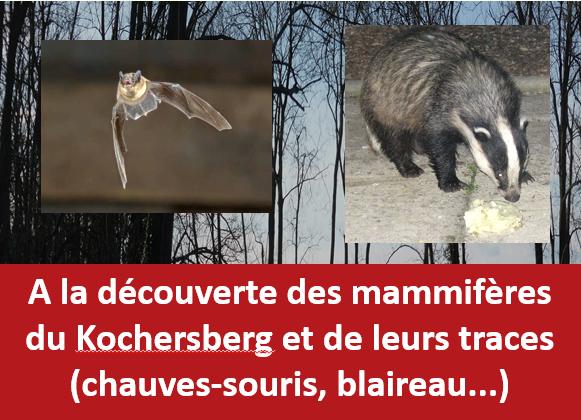 Sortie Nature (nocturne) : sur les traces des mammifères du Kochersberg