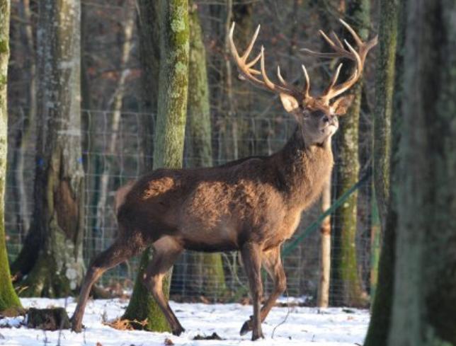 [communiqué de presse] La Biodiversité en Alsace sacrifiée sur l'autel de la chasse ?