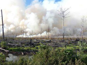 Hommage aux forêts incendiées - Je suis Amazonie @ Strasbourg | Strasbourg | Grand Est | France