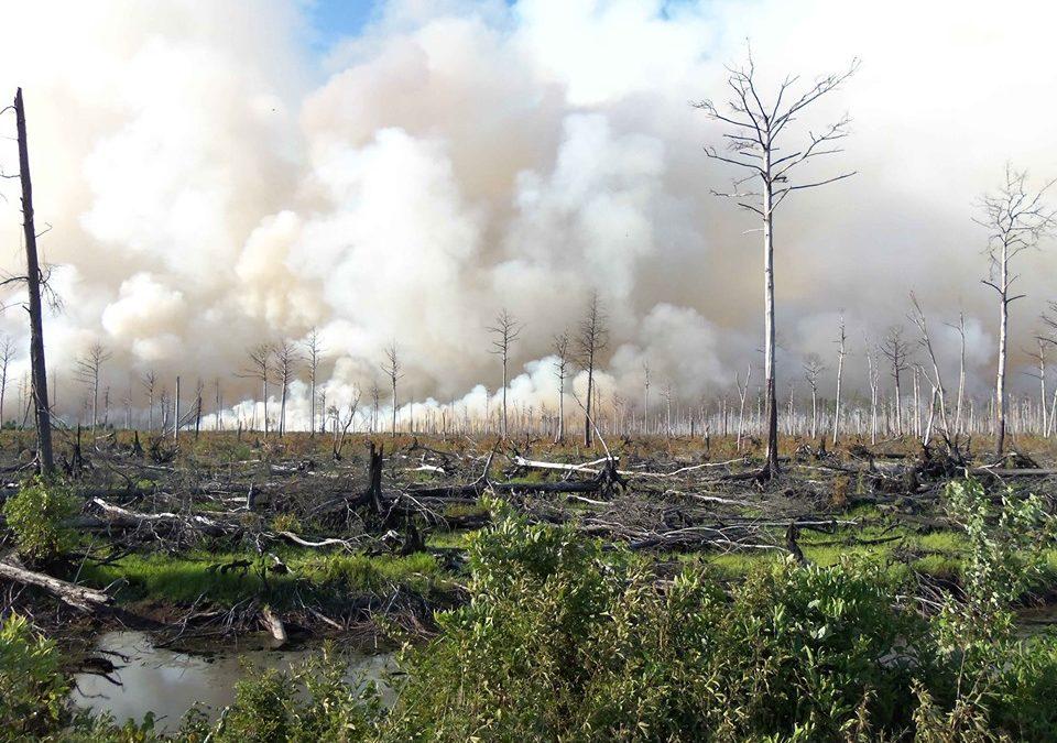 Hommage aux forêts incendiées – Je suis Amazonie