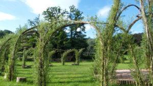 Physalis a besoin d'une nouvelle beauté  ! @ Parc de la Villa Burrus | Sainte-Croix-aux-Mines | Grand Est | France