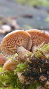 Initiation et découverte des champignons @ communiqué à l'inscription   Sarre-Union   Grand Est   France