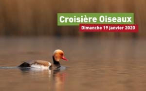 Croisière Oiseaux 2020 @ Kembs | Kembs | Grand Est | France