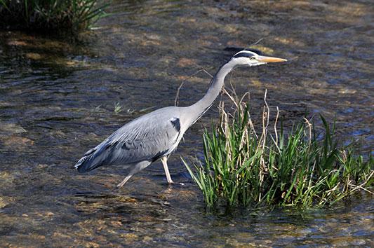 Les oiseaux du Delta de la Sauer