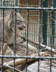 Participez à la consultation publique sur l'avenir du Zoo de l'Orangerie à Strasbourg
