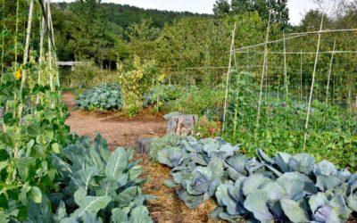 Kochersberg : Un débat très riche autour de la permaculture