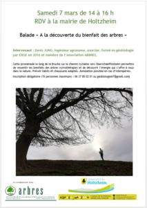 Sortie « A la découverte du bienfait des arbres » @ Holtzheim | Holtzheim | Grand Est | France