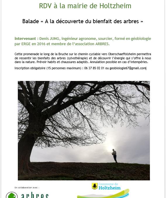 Sortie « A la découverte du bienfait des arbres »