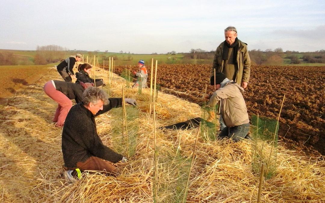 Chantier participatif de plantations à Lingolsheim
