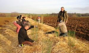 EVT REPORTE - Chantier participatif de plantations à Lingolsheim @ Lingolsheim