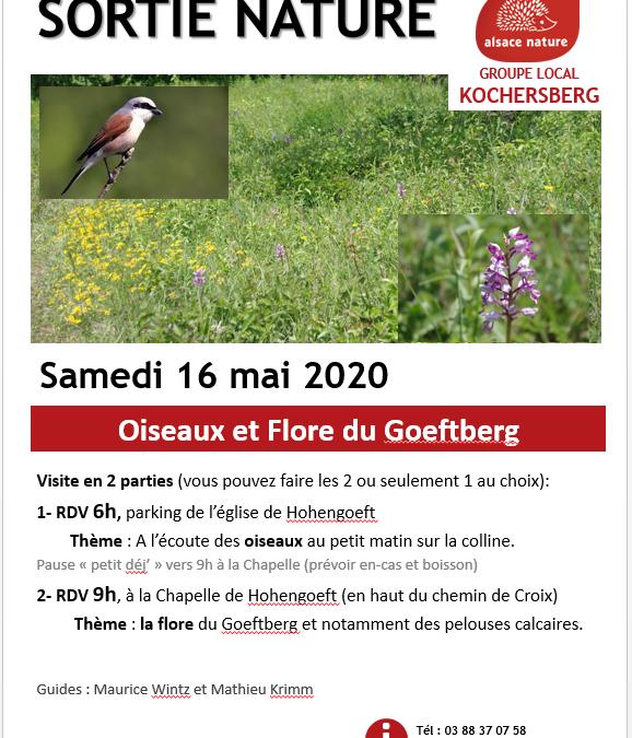 ANNULE – Oiseaux et Flore du Goeftberg