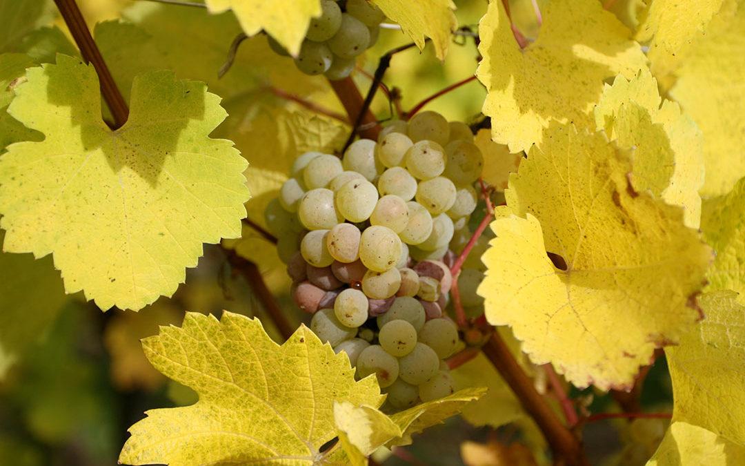 """Alsace Nature réagit à l'article des DNA du 28 avril 2020 """"Viticulture zone de non traitement : Viticulteurs et riverains : un dialogue à construire"""""""