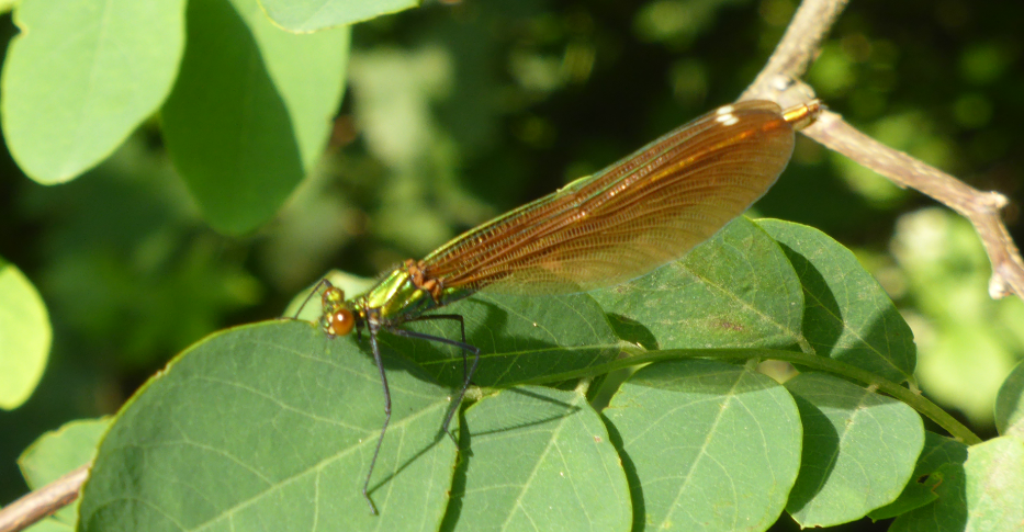 Sortie Nature REPORTEE : A la découverte des insectes du Kochersberg