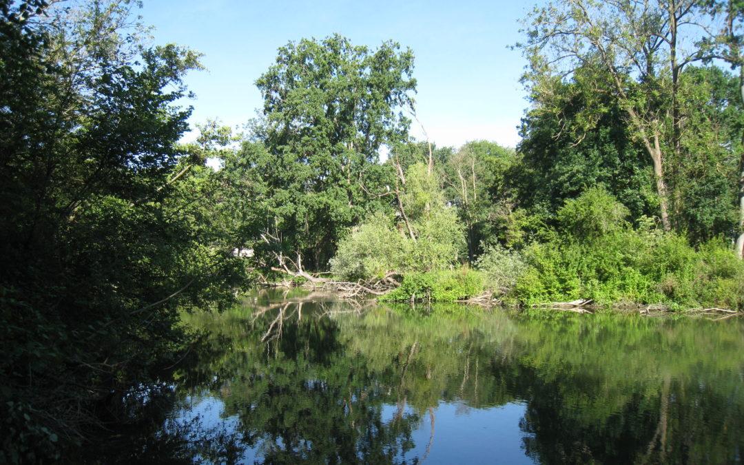 [Sortie nature] De l'eau à la bouche, les rives de l'Aar et de l'Ill