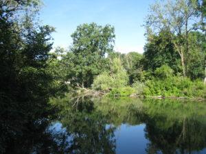 [Sortie nature] De l'eau à la bouche, les rives de l'Aar et de l'Ill @ Schiltigheim
