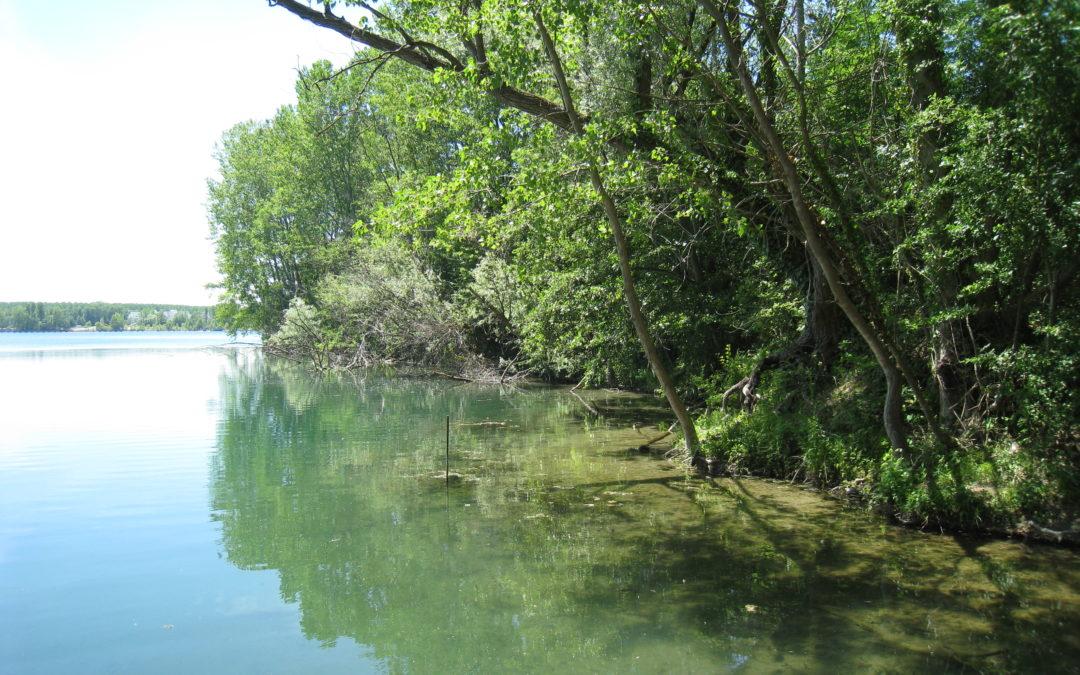 Sortie nature : La nature en ville, une plongée dans la trame verte et bleue