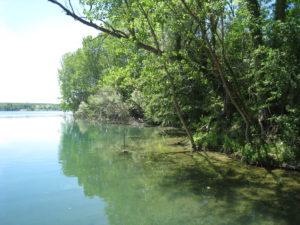 Sortie nature : La nature en ville, une plongée dans la trame verte et bleue @ Ostwald | Ostwald | Grand Est | France