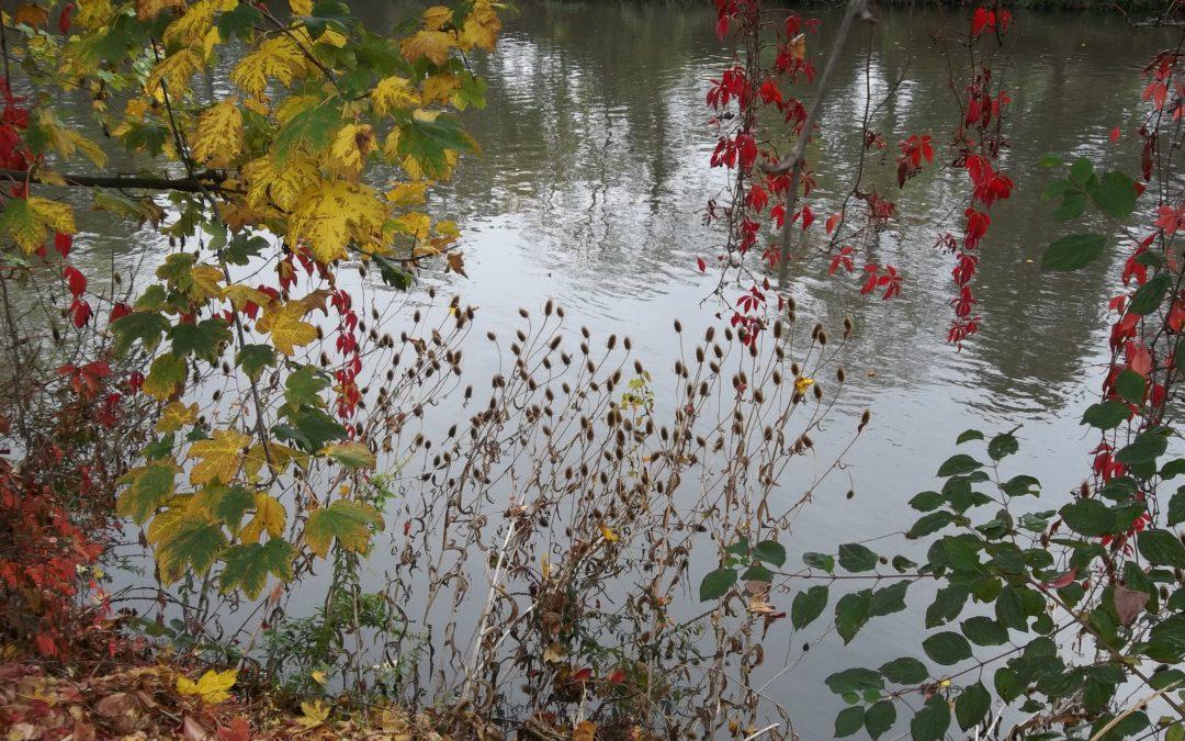 [Sortie Nature] La nature en ville : La Ballastière aux couleurs d'automne