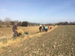 Participez au premier chantier de plantation de haie cet automne à Lingolsheim ! @ Lingolsheim | Lingolsheim | Grand Est | France