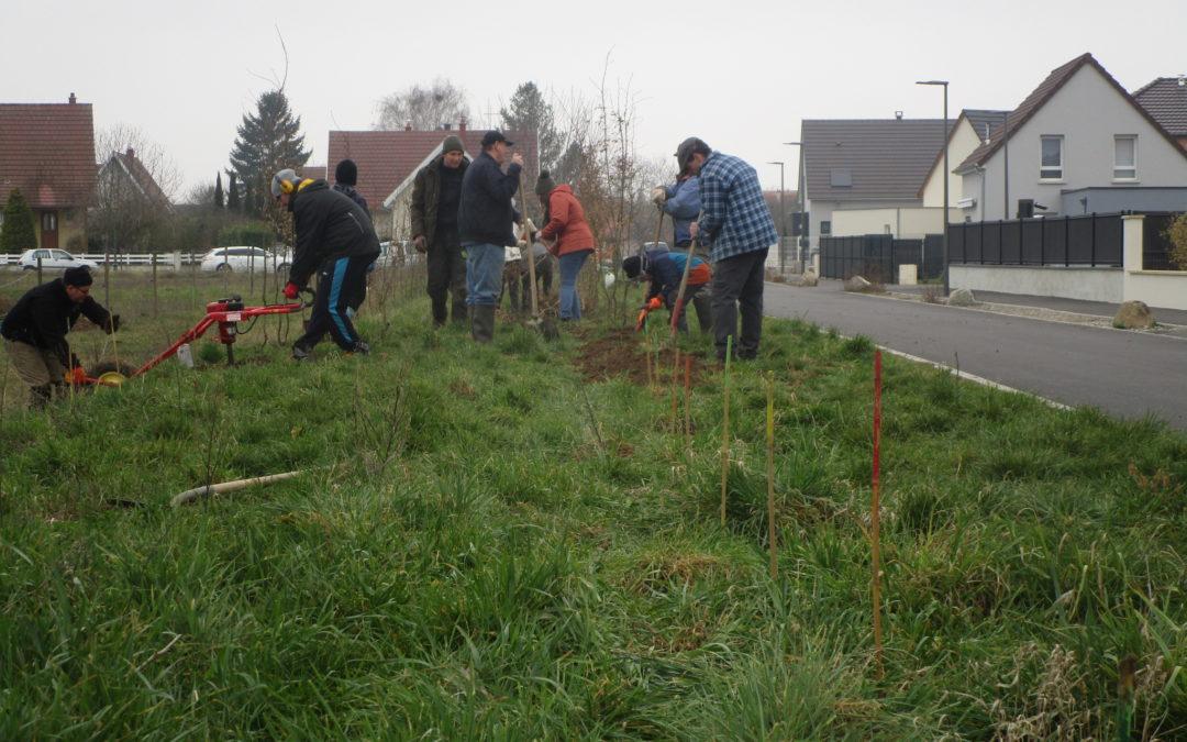 – Participez aux premiers chantiers de plantation de haies cet automne à Schiltigheim